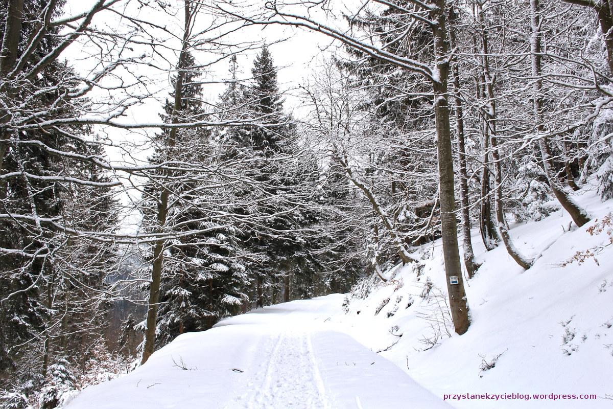 szlak na snieznik5